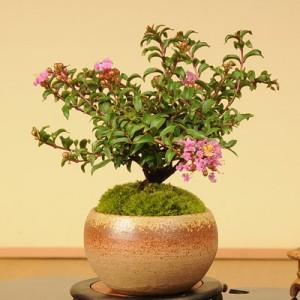 可愛い小さな盆栽の育て方〜季節を感じる盆栽選び〜