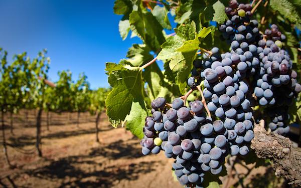 自然派ワインが美味しいと絶賛される3つの理由!