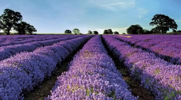 南仏コートデュローヌで訪れてみたいおすすめ観光スポット