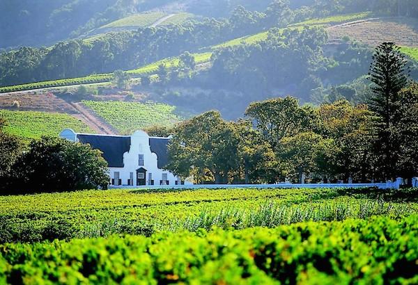南アフリカワイン3つの特徴と人気が上昇している理由!