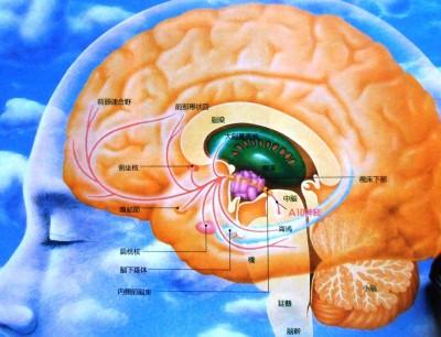 脳内の2つの場所により喜怒哀楽が生まれる