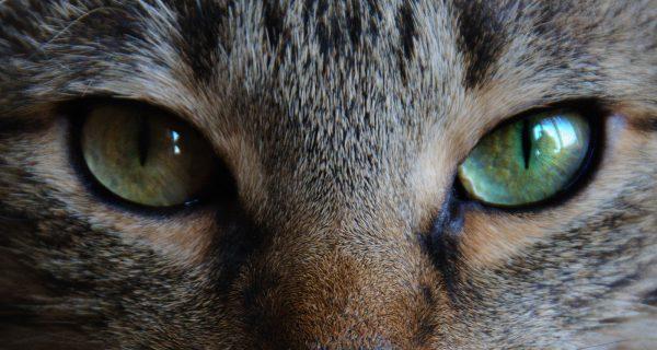 目を見て話すのが苦手でも、楽にアイコンタクトできる5つの術
