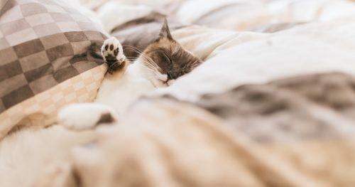 快適な睡眠をとり、仕事効率化につなげるテクニックとは