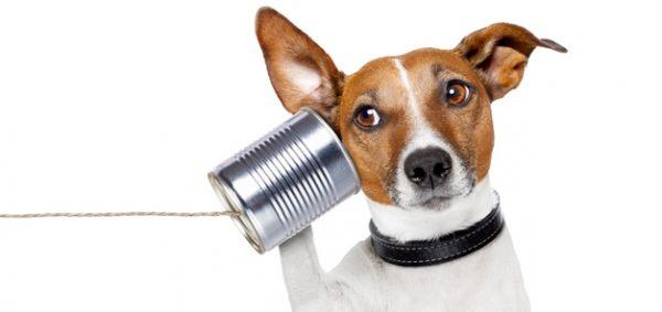 聞く力を身につけるだけで仕事がスムーズに運ぶ5つの理由