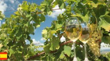 地中海の香り漂うスペインワイン! おすすめ白ワイン5選
