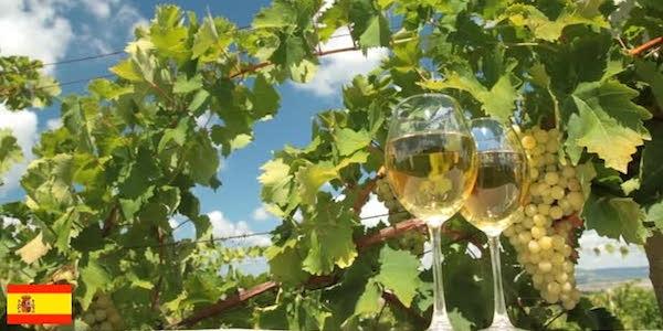 地中海の香り漂うスペインワイン!おすすめ白ワイン5選
