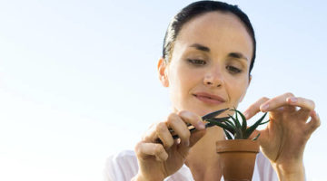 アロエの育て方を学んで、美容と健康に活用する5つの方法