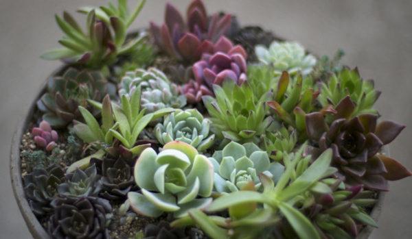 初心者でも簡単に挑戦できる、多肉植物の寄せ植え方